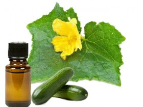 cucumber essential oil