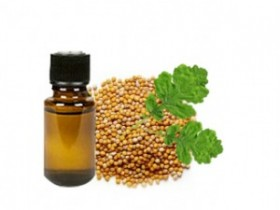 buy mustard essential oil